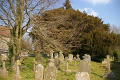 Herstmonceux Churchyard, yew tree (debs-eye) Tags: churchyard gravestones yewtree villagechurch herstmonceuxchurch