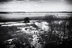 Silence (Erik Mattsson) Tags: trees snow nature landscape spring sweden natur snö träd vår åker landskap örebro svartvitt tystnad öbykulle fotosondag fs130407