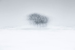 Peak District Copse (dougchinnery.com) Tags: camera uk trees winter snow blur me spring movement exposure district peak bailey multiple hudson walls peaks icm intentional friel chinnery intentionalcameramovement