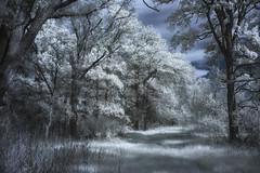 texas infrared 720nm lifepixel comanchecounty gregwestfall gregwestfallphotography