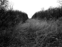 Up the cut (explored) (pilechko) Tags: blackandwhite monochrome landscape nj somersetcounty sourlands