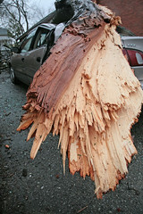 Big Splinters (peterkelly) Tags: auto ontario canada storm tree ice broken car digital automobile branch wind guelph 1999 fallen icestorm northamerica wrecked splintered toyotacorolla windstorm