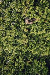 Emerging With Grace (theprettyprint) Tags: portrait tree green nature girl beautiful self sheri grace cedar 365 emerging