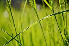 Zen (Tinina67) Tags: green field grass garden relax concentration lawn meadow wiese zen tina gras meditation wish gruen herbe odc stille wayside gazon ourdailychallenge tinina67