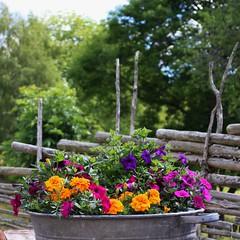 IMG_6677 (2) (karlsson_mari) Tags: by blommor gärdesgård åsens
