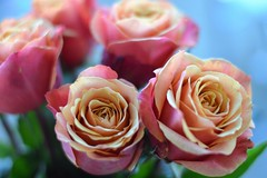 A pair of Roses (johnbolden) Tags: aperture roses flowers