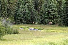 Elk 3 (nicoangleys) Tags: tetons grandtetonsnp nationalpark wyoming jacksonhole schwabacherslanding