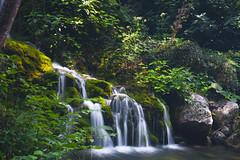 Capelli di Venere_02 (picture_on) Tags: casaletto spartano salerno natura nature wild river fallen fiume cascata capelli di venere nikond700 nikon2470mm