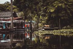 South Of Bangkok (Ronan Siri Photography / @:ronan.sirim@gmail.com) Tags: water river thailand dog dogs light reflection explore jungle trees forest nature wild