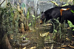 Bernhard Family Hall of North American Mammals (markusOulehla) Tags: americanmuseumofnaturalhistory nyc newyorkcity markusoulehla nikond90 citytrip thebigapple usa manhattan