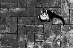 Mrame! - Look at me! (Eva Ceprin) Tags: gato cat animal ojos eyes blancoynegro blackandwhite suelo floor minimalismo minimalism monocromtico airelibre nikond3100 evaceprin tamron18270mmf3563diiivcpzd outdoor geometry geometra