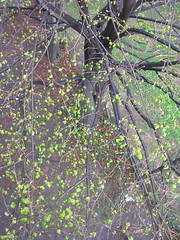Above the enchanted tree (mi ne volimo alu) Tags: outdoor spring green tree birdsview asymmetry nature colour branches leaves twigs bloom foliage vegetation