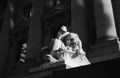 (nich_thomas) Tags: new york nyc sculpture white black film lion marble