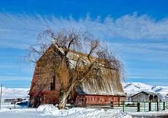 Preston Idaho (Pattys-photos) Tags: winter barn idaho preston