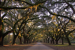 WormsloWormsloe Plantation Oaks-Plantation-Oaks_1 (Seth Berry Photography) Tags: seth site moss berry historic spanish plantation mossy wormsloe wormslow sethberryphotography
