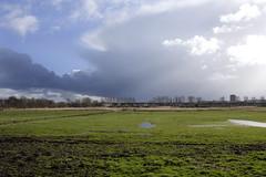 Zuidrand Midden-Delfland_9980 (Jeannemieke Hectors) Tags: middendelfland grauweganzen