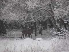 SALBURUA (eitb.eus) Tags: g1 invierno vitoriagasteiz 26330 eitbcom tiemponaturaleza javiersarasua
