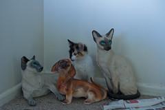 057:365 Multiple Odd One Out (Cha'trez) Tags: dog cat out one odd multiple 365 stillness akemi 1095