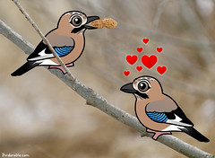Eurasian Jays (birdorable) Tags: