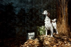 Tomboy (MilkaWay) Tags: window grass leaves statue bag store display hunting birddog dogfood pointing quail setter tomboy burkecounty smalltowngeorgia midville