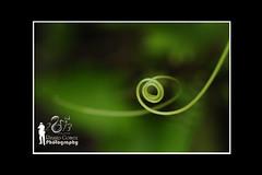 Nature's Spiral (Ringgo Gomez) Tags: 1001nights macroextreme macrolicious anawesomeshot flickrdiamond malaysianphotographers concordians elitephotography macromarvels macrolife nikond700 sarawakborneo 1001nightsmagiccity flickrawardgallery