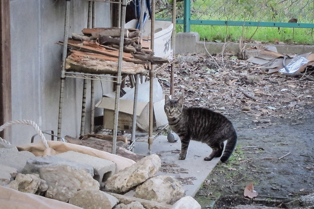 Today's Cat@2013-03-17