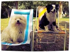 The Happiness after a refreshing Sea Bath! (moniketta) Tags: sea summer dogs fun bath mare estate midi bagno batu cani bordercolliemix divertimento cotondetulear