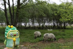 Jeero Meets Some Sheep (tofu_catgirl) Tags: uk england toy countryside sheep lakedistrict vinyl cumbria gb uglydolls jeero davidhorvath sunminkim img8562
