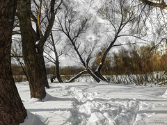 Too much Snow These Days (smuta2006) Tags: winter shadow snow tree ice beach apple nature river landscape bush scenery frost branch grove snowdrift bank ukraine trunk split shrub kiev hdr snowbank iphone dnieper porusski iphoneography instagramhub igukraine uaiphoneography hubhdr hubnature