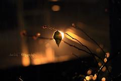 I cant see u (Aadilsphotography) Tags: street light rain night canon 50mm leaf drops bokeh