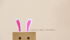 Danbo Rabbit (Arielle.Nadel) Tags: rabbit bunny easter cardboard danbo toyphotography revoltech danboard cardbo canon5dmarkiii bunnyrel ariellenadelphotography