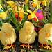 Happy Easter in 66 Different Languages - EXPLORE