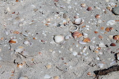 Seashells (Hyalma) Tags: beach strand canon seaside sand shell seashell muschel canoneos1100d