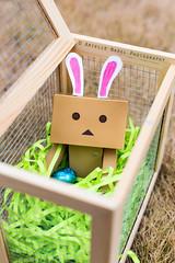 Happy Easter! (Arielle.Nadel) Tags: rabbit bunny easter cardboard yotsuba danbo toyphotography revoltech danboard cardbo canon5dmarkiii bunnyrel ariellenadelphotography