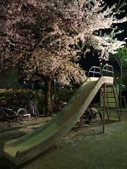 R0015237 (Hiro - KokoroPhoto) Tags: park pink japan night cherry japanese kyoto blossom blossoms  bloom  cherryblossom  sakura cherryblossoms nippon cherrytree 6mm   kiyamachi   kyotocity  2013