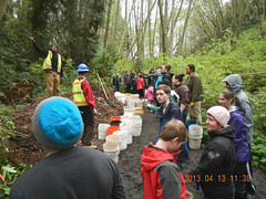 Setting up the bucket brigade (Holy Outlaw) Tags: seattle community parks restoration urbanforest nativeplants workparties earthcorps seattleparks northbeachpark urbanrestoration friendsofnorthbeachpark