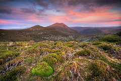 Cushion over Cradle Cirque (Luke Tscharke) Tags: sunset sky plants landscape nationalpark track colours view alpine vegetation wilderness worldheritage overland cradlemountain 1740l overlandtrack cushionplant leefilters cradlecirque 5d3 5dmarkiii mountemmett