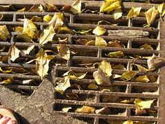 Leaves on a grate