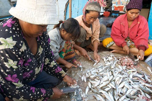 Preparing small fish in Cambodia. Photo by Patrick Dugan, 2010.
