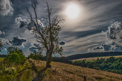 hillclimbing tree (bocero1977) Tags: blue trees light sky sun mountains tree green nature colors lines clouds germany way landscape evening moody cows sundown outdoor path hills fields harz