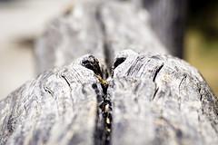 DSC04084 (George Detsaris) Tags: wood fence parnitha mountain athens