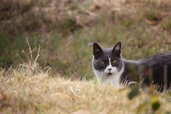 Le Flin (Slytheerin) Tags: cat hunting chat flin