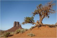 Monument Valley 0006 (Ezcurdia) Tags: monumentvalley utah arizona usa eeuu navajo tsebiindisgaii limolita navajotrivalpark johnfordpoint