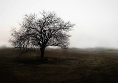 Home (adeoluosibodu) Tags: tree trees forest field foggy moody tones photography fineartphotography nature explore discover exploration