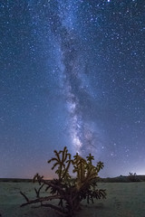 Cholla and the Milky Way (slworking2) Tags: milkyway galaxy desert anzaborrego anzaborregodesertstatepark night nighttime sky cholla cactus california unitedstates us