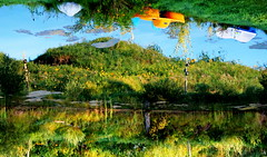 Water Art: Up or down, it's a beautiful summer morning (peggyhr) Tags: peggyhr waterart pedalboats reflections sunflowers rock grasses shrubs wildflowers blue white yellow green flipped bluebirdestates alberta canada morning sunlight birdhouses posts logs cattails thegalaxy super~sixbronzestage1 thelooklevel1red rainbowofnaturelevel1red infinitexposurel1 level1peaceawards thelooklevel2yellow