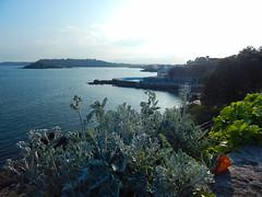 Plymouth-201605-40 (Tony J Gilbert) Tags: plymouth marine macro underwater diving nikond300 handdeeps jameseaganlayne hilseapointrocks scylla ceeking wwwdivingplymouthcom