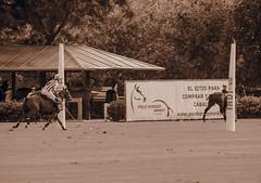 20160814183545 (Federico Alberto) Tags: santamarapoloclub polosotogrande sotograndepolo es espagne espaa polo sotogrand spain olympus omd em1 panasonicleicadgvarioelmar100400mmf463asph horses caballos chevaux cdiz andalusia dubaipoloteam goldcup nophotoshop nohdr