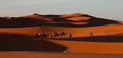 In the rising sun (pe_ha45) Tags: desert wste marokko maroc sahara morocco ergchebbi desierto deserto nascerdodol leverdusoleil amanecer marruecos marrocos