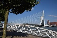 Erasmusbrug Rotterdam (eddespan (Edwin)) Tags: rotterdam erasmusbrug bridge zuidholland nederland brug nieuwemaas